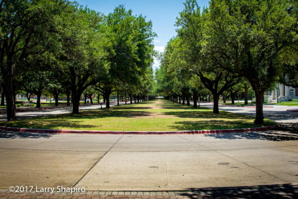 A beautiful tree lined street on the SMU campus.